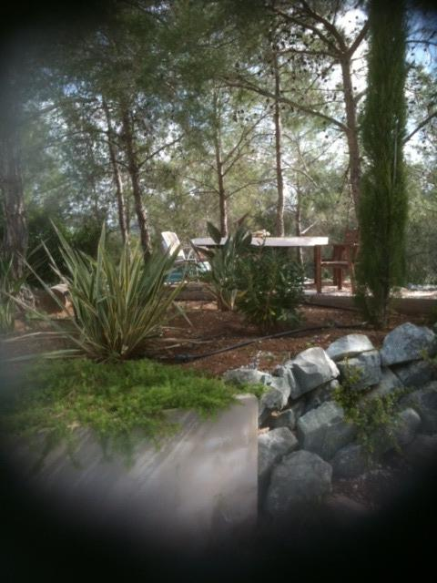Pine woodland at rear of garden