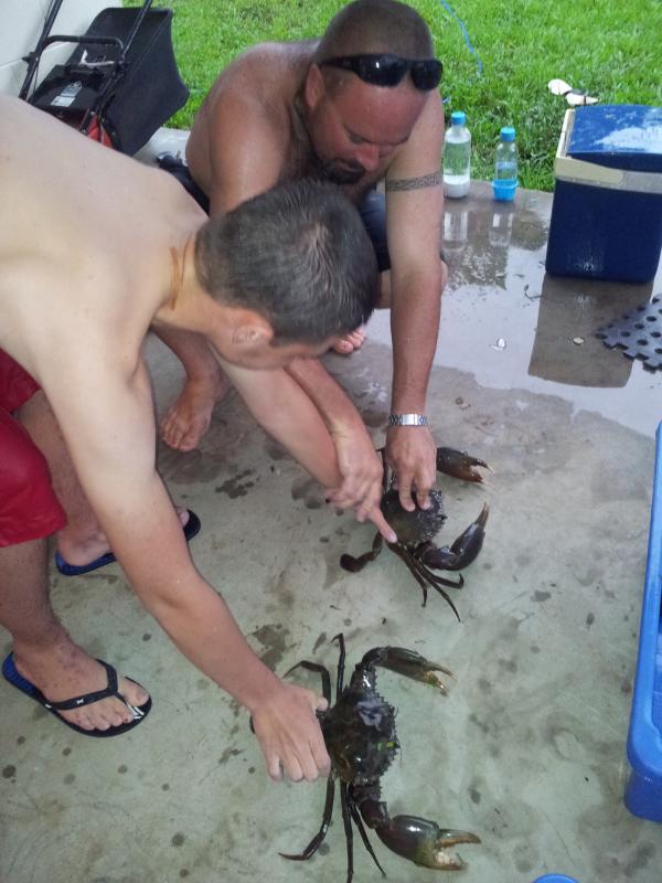 Crabes de Victor Creek Seaforth.