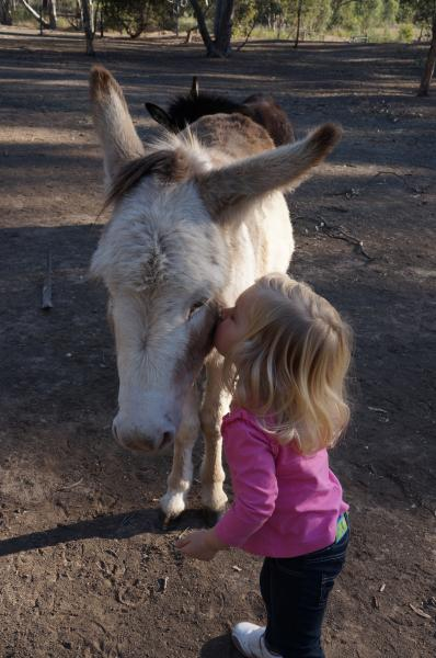 DonkeyTales Farm Cottages - Duffy's Cottage - Maryborough/Talbot, holiday rental in Dunolly