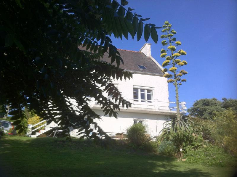 Front of house from under the shade of the old Ash tree