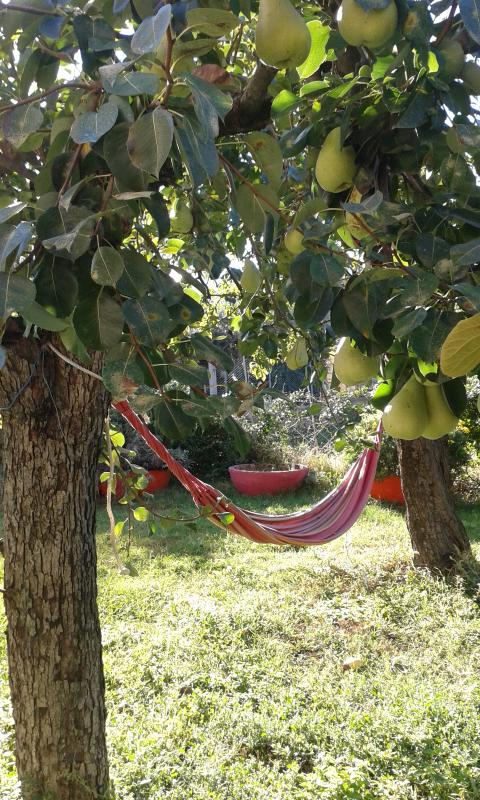 relax in the garden area and fresh seasonal fruit