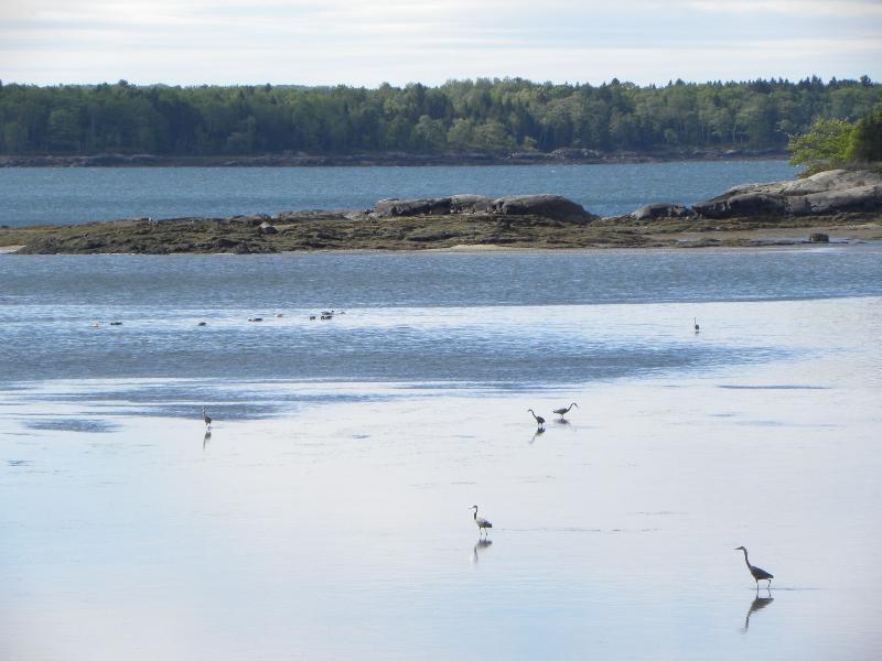 Birds feeding at low tide