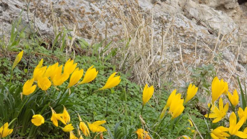 Skyros autumn wildflowers