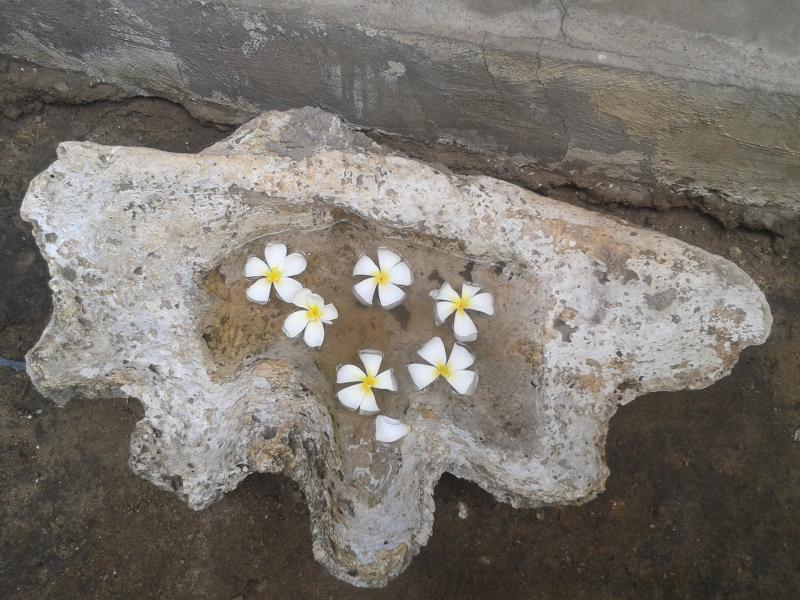 Fleurs de frangipanier jolie
