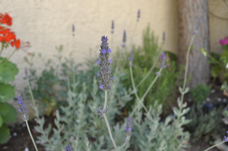 Aromatic herbs, trees and flowers in our gardens