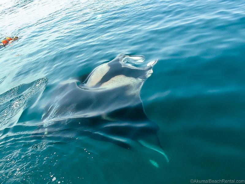 Day trip to take a swim with a giant Manta Ray