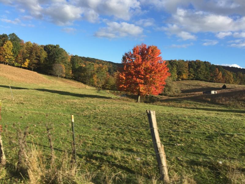 Beginning of fall along the Blue Ridge Parkway