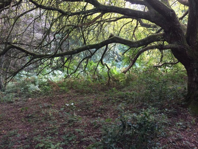 Beautiful woodland scenery