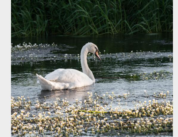 River wildlife