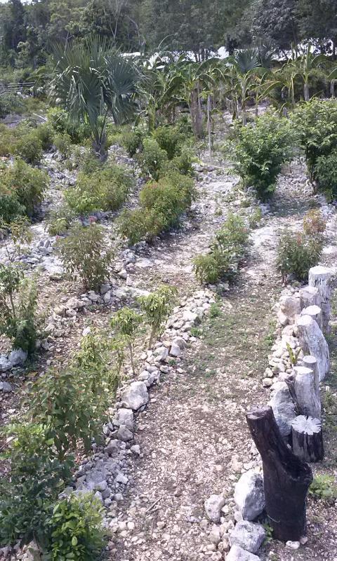 Las paredes vegetales creciendo del Laberinto.