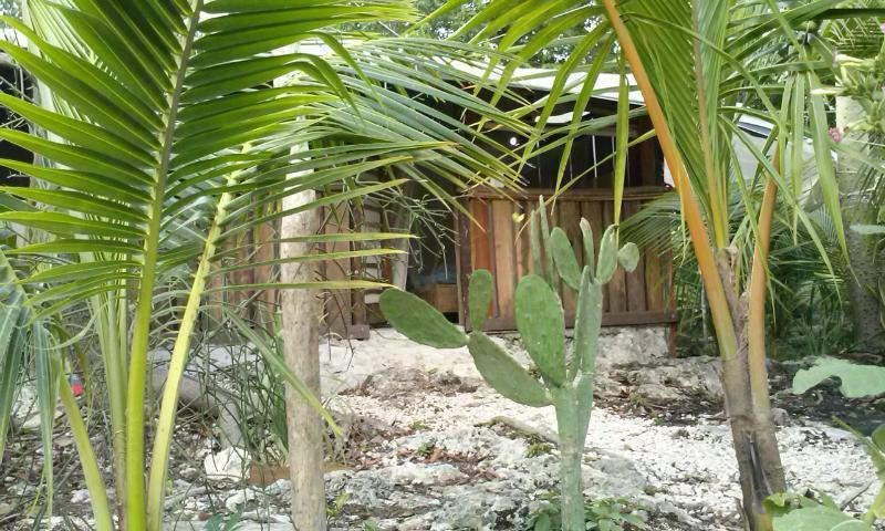 Ceiba de la cabaña