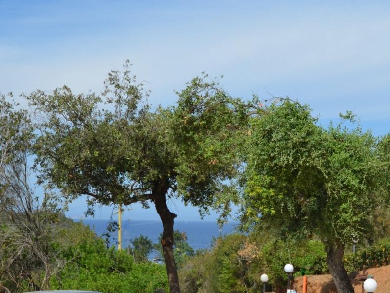 Casa Serena G, holiday rental in Naregno