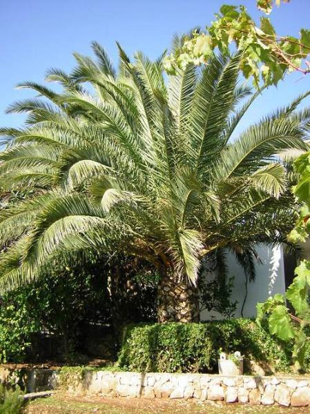 plante florissante (maison et ses environs)