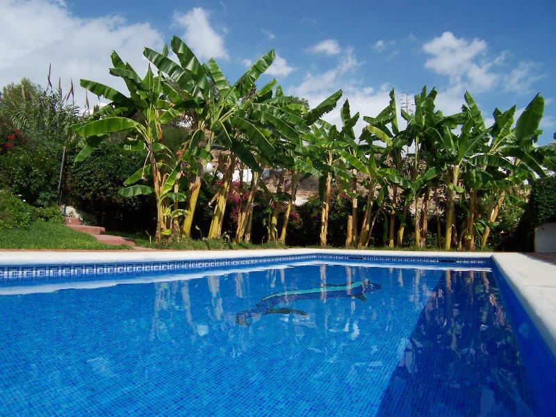 Pinomar pool