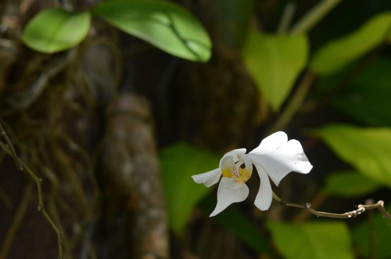 Native orchid at the property