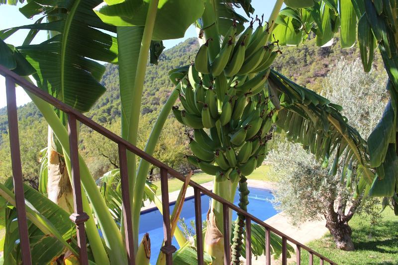 piscina con plátanos