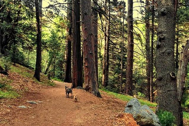 Photos from Valley of Enchantment, Crestline