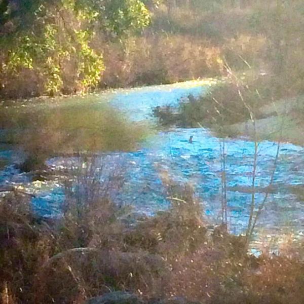 Plus de 1000 pieds de séquences Onion Creek