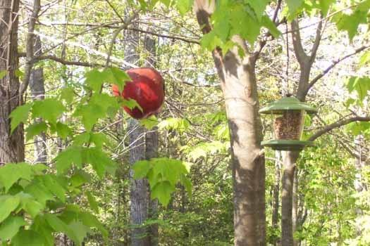 Bird Feeds at Mountain Manor