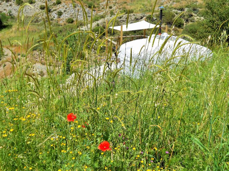 'Qadan' surrounded by the field of poppies