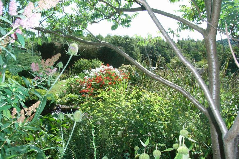 Part of the lush garden