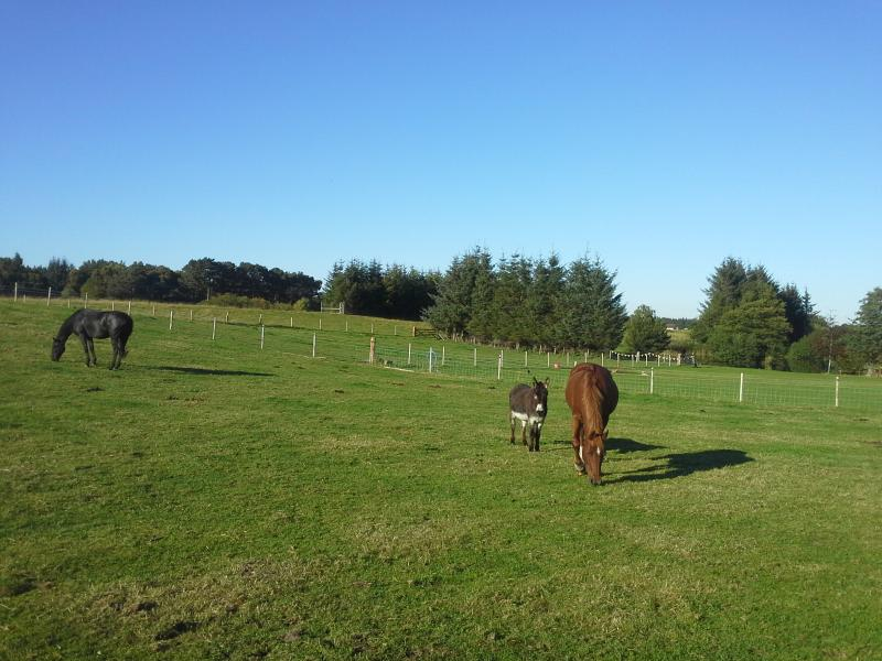Quester and Paddy (horses) and Hamish the donkey