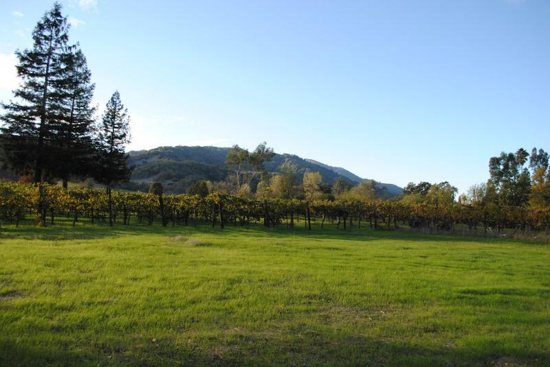 view of vineyards out the back of the property