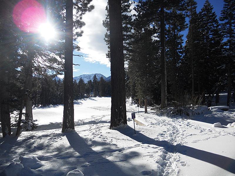 Sierra Star in the Winter next to Bigwood