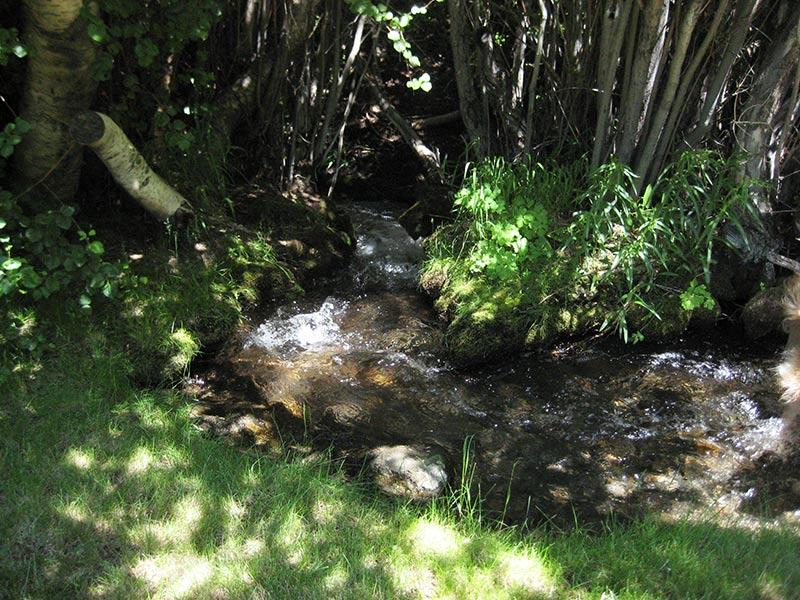 Creek Outside of Duplex Cabin (#1 and #2)