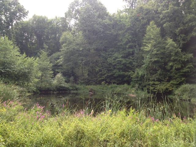Primavera, nuestro estanque privado