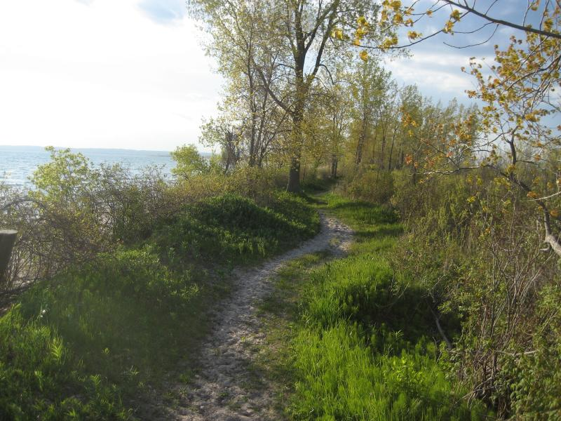 Sandy beach trail that runs parallel to and just behind beach