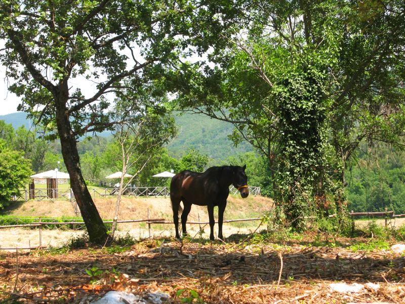 Our horse in paddock, next to pool. Riding, free of charge - must book in advance.