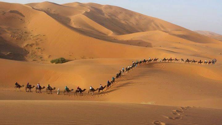 Sahara Camel Trekking Merzouga, vacation rental in Rissani