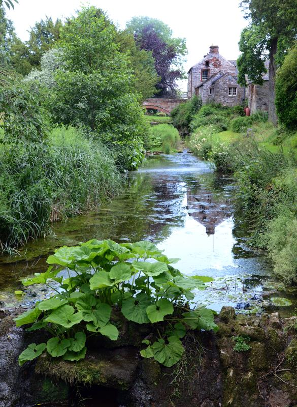 Looking along the beck in the garden