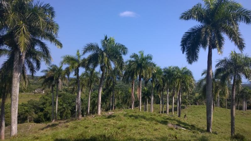 hike the hillsides