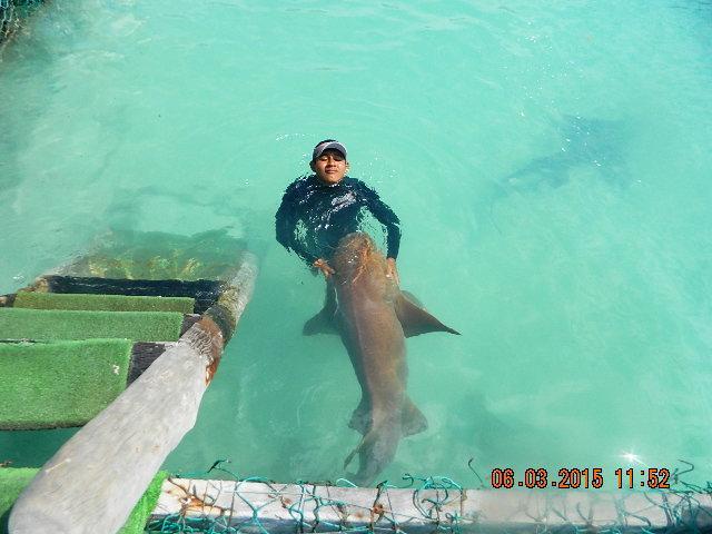 nage avec activité de requin