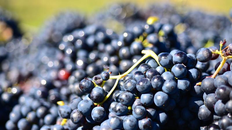 la nostra uva