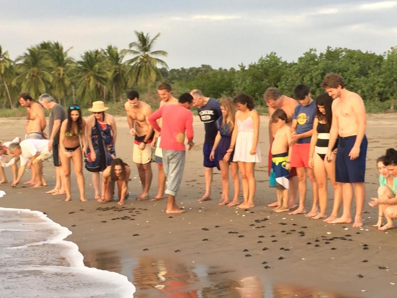 The turtle camp host will give instructions on how to release the turtles safely to the sea.