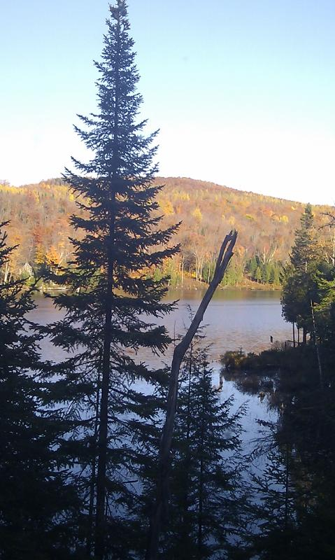 View towards the lake.