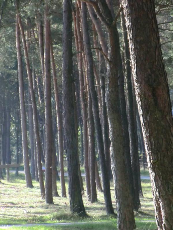 Forest! Veluwe!