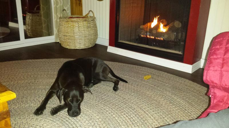 Elli warming up next to fire place