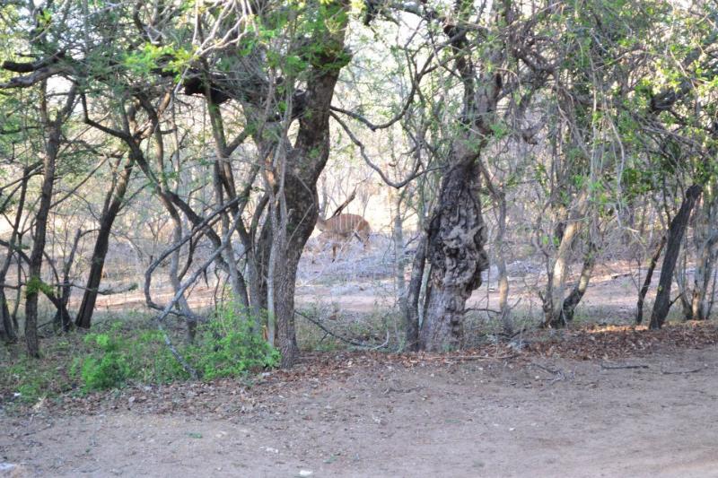 Bosbok visto desde varanda
