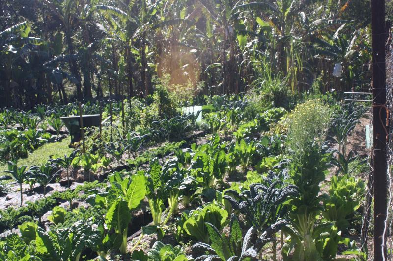 Saisonale zertifiziert Bio Obst/Gemüse zu Großhandelspreisen zur Verfügung.