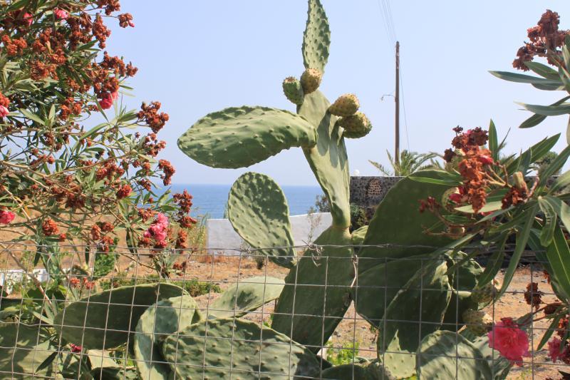 villa partof garden