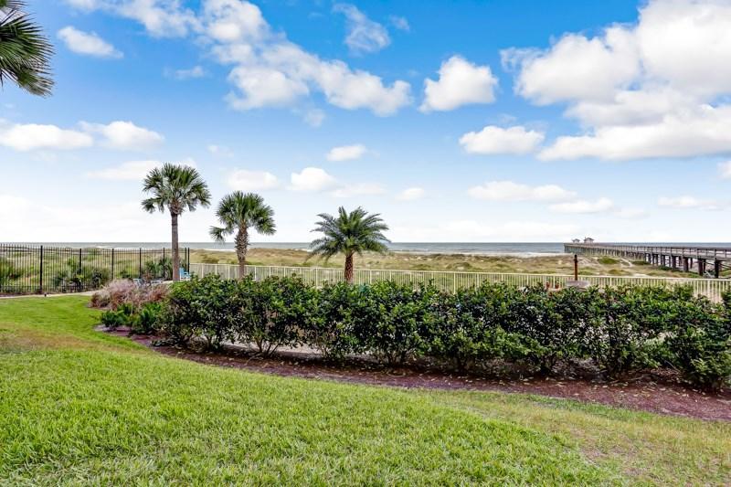 Fence,Hedge,Palm Tree,Tree,Tropical