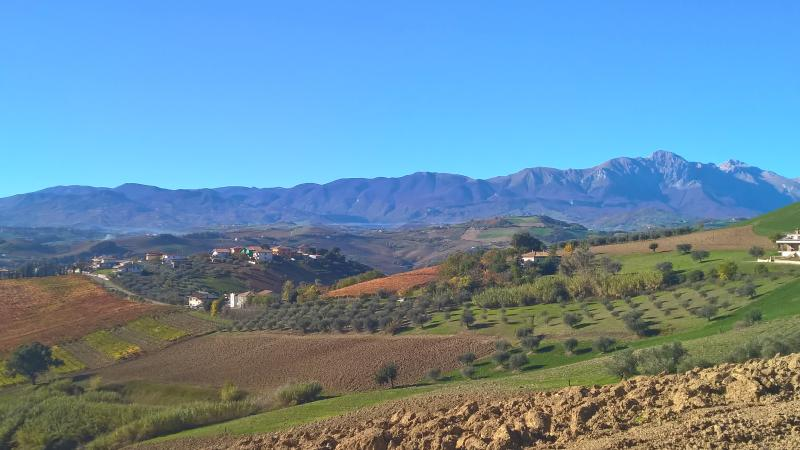 Autumnal colours of the local vineyards surrounding Casa Bianca.