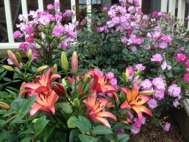 Liliums and Roses - late Nov
