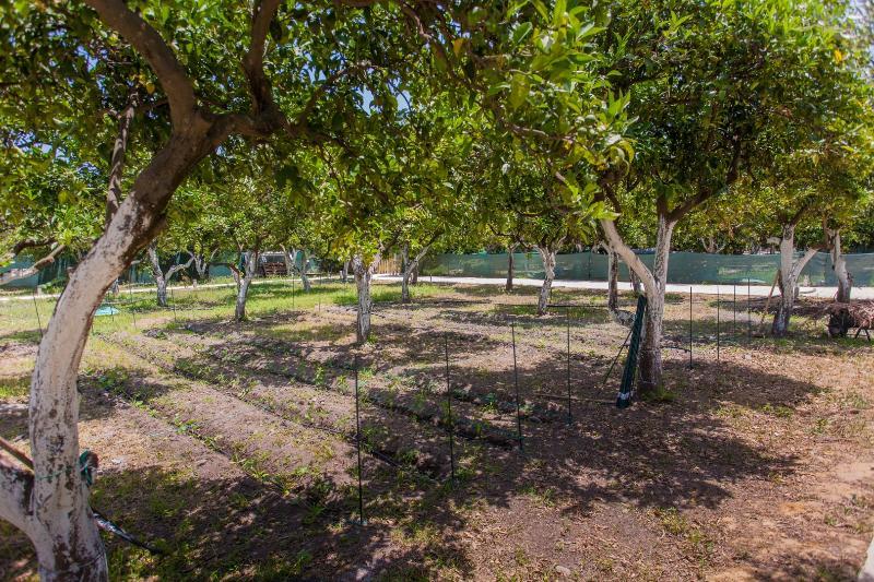 Villa verde naranja y granja orgánica y colecciones de aves griegas en Chania Creta Grecia