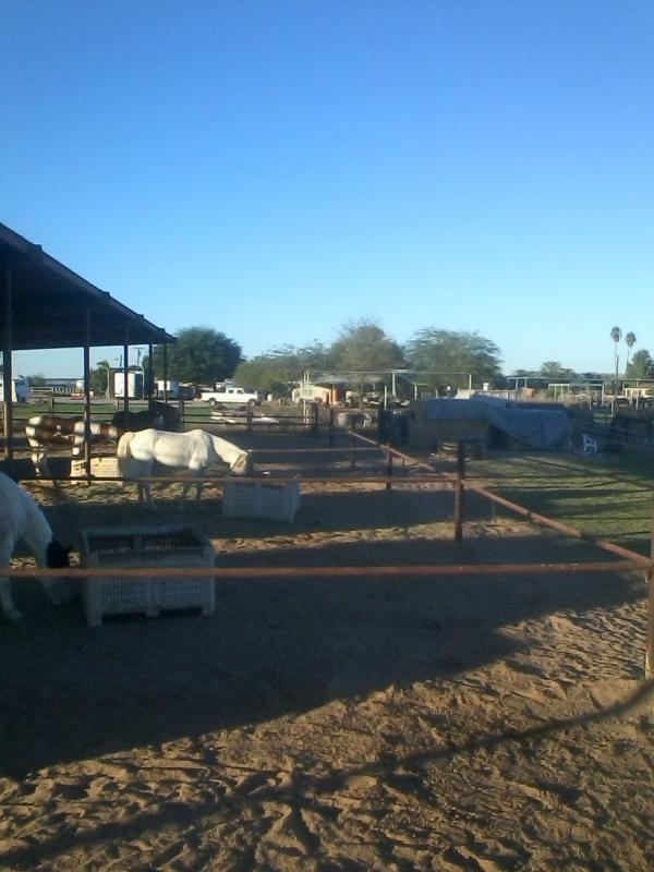 13 horses this year; we offer trail rides