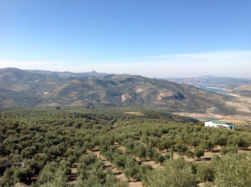 The area is famous for its olive oil. Views from the farmhouse